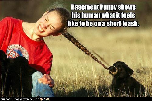 Basement Puppy shows his human what it feels like to be on a short leash.