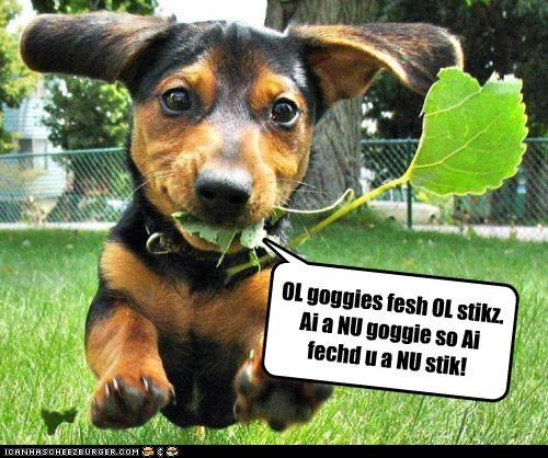 argument,dachshund,fetch,goggies,new,old,playing,puppy,stick