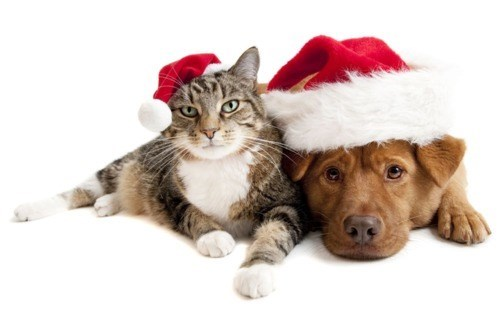 christmas,dogs,goggies,goggies r our friends,holidays,Interspecies Love,santa,santa hats
