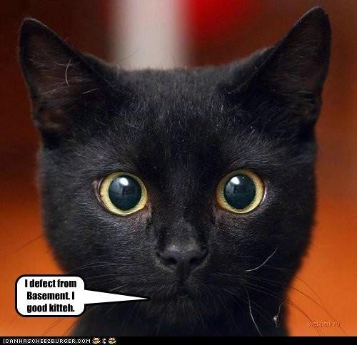 I defect from Basement. I good kitteh.