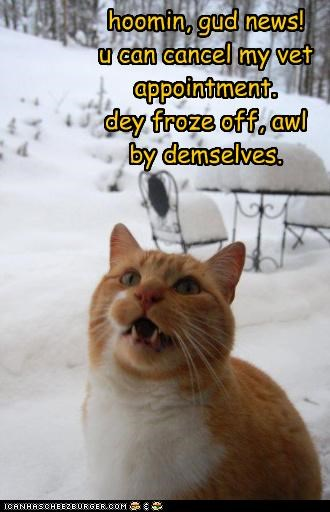 alert,appointment,caption,captioned,cat,cold,fixing,freezing,frozen,good news,informing,snow,vet