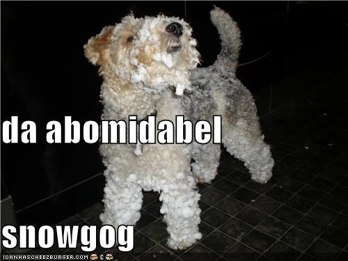 abominable,abominable snowman,covered,he,snow,snow dog,whatbreed