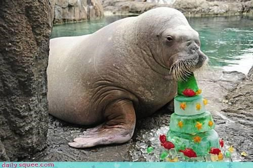 disappointed,do not want,eating,fruitcake,gift,hate,noms,walrus