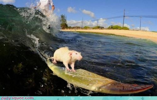 Acting Like Animals: I'm Such a Surf Rat!