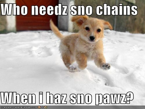 Who needz sno chains  When i haz sno pawz?