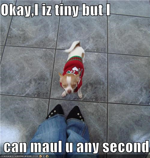 Okay,I iz tiny but I   can maul u any second