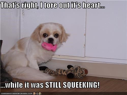 brutal,evil,Hall of Fame,heart,maltese,proof,squeaking,squeaky toy,stuffed animal,thats-right,tore,toy