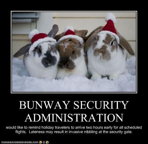 bunnies,bunway,bunway airlines,caption,captioned,christmas,holidays,santa hats,TSA