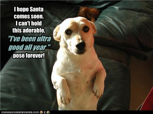 "I hope Santa comes soon. I can't hold this adorable, ""I've been ultra good all year"" pose forever!"