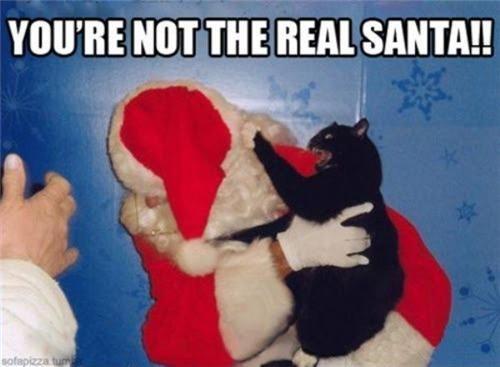 basement cat,cat,mall,painful,santa
