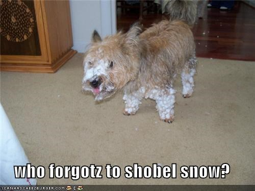 who forgotz to shobel snow?
