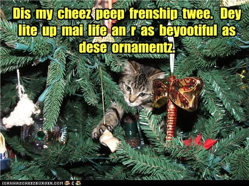 Joy and blessings to all my cheez frens.
