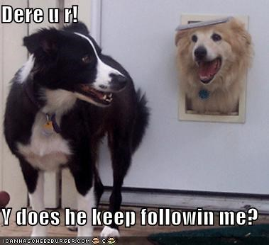 Dere u r!  Y does he keep followin me?