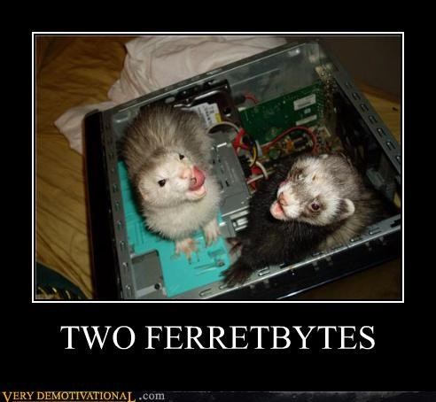 TWO FERRETBYTES