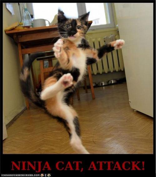 Ninja Cat, Attack!