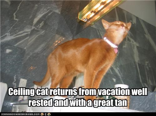 Ceiling cat returns from vacation well rested and with a great tan