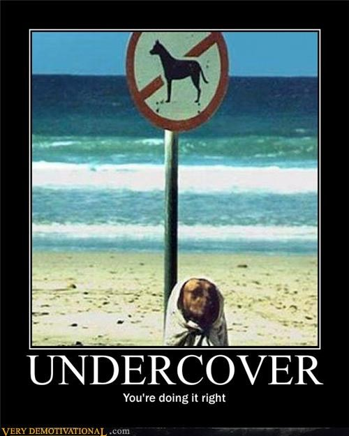 anthropomorphization,disguise,dogs,signs beach,undercover