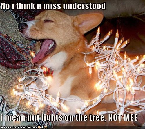 No i think u miss understood  i mean put lights on the tree, NOT MEE