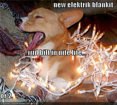 blanket,christmas,christmas lights,corgi,electric blanket,excited,happy,lights,new,present