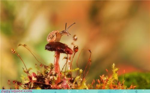 cute,snail,weird