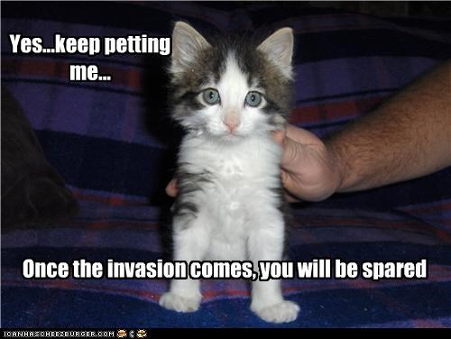 caption,captioned,cat,do want,encouraging,invasion,keep,kitten,petting,spared,yes
