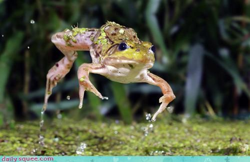 Acting Like Animals: Literal Leap Frog FTW