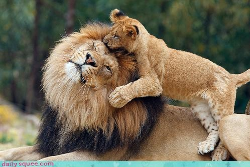acting like animals,aside,astrophysicist,baby,cub,cuddling,exception,lion,love,rule