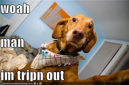 bandana,camera,critters,dogs,drugs,tripping