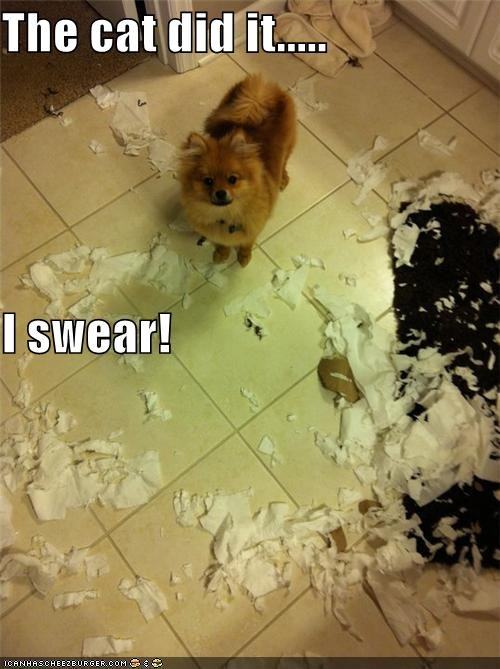 The cat did it..... I swear!