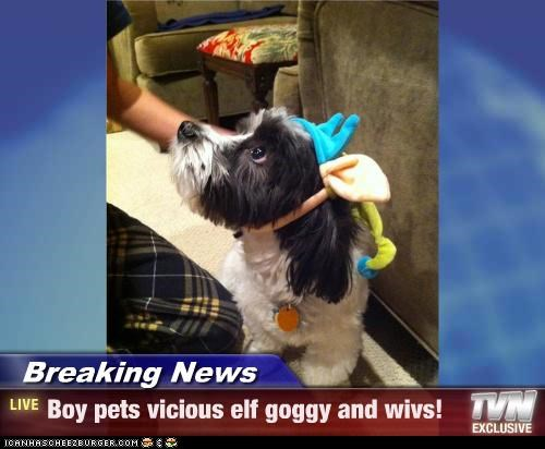 Breaking News - Boy pets vicious elf goggy and wivs!