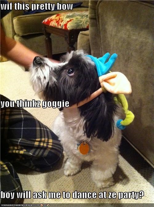 accessory,bow,boy,crush,dance,hoping,Party,pretty,question,romance,terrier,whatbreed