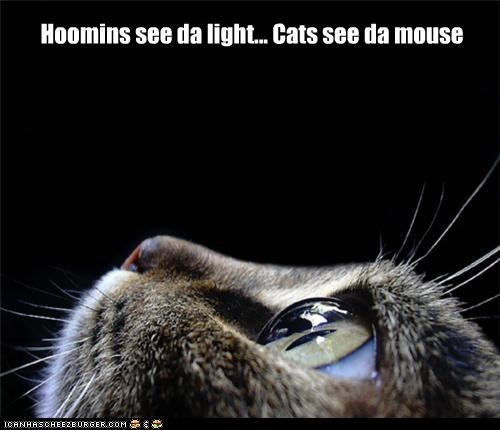 Hoomins see da light... Cats see da mouse