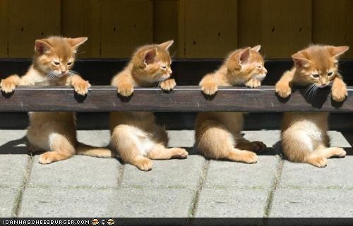 ballet,barre,cyoot kitteh of teh day,dancing,kitten,orange