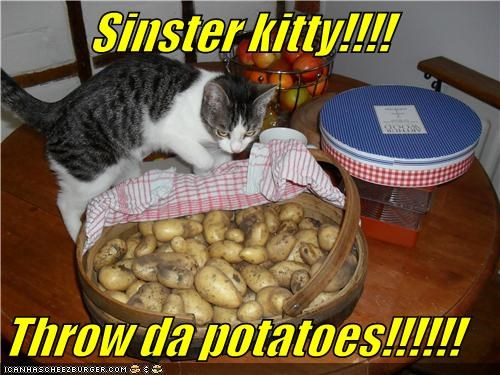 Sinster kitty!!!!  Throw da potatoes!!!!!!