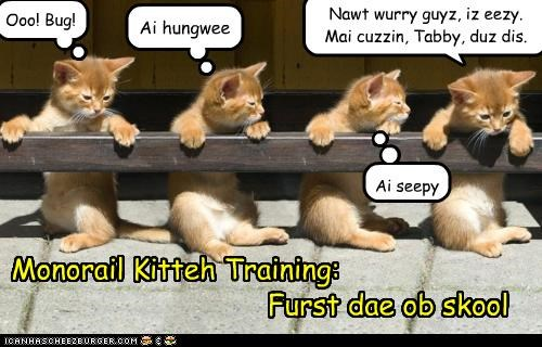Monorail Kitteh Training