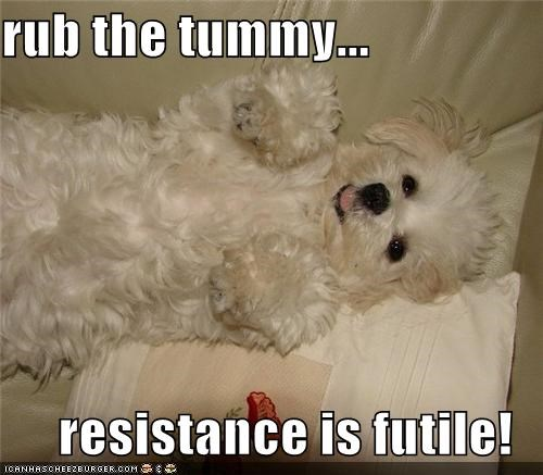 rub the tummy...  resistance is futile!
