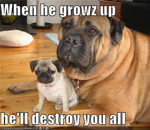 destroy,growing up,grown up,Hall of Fame,mastiff,parent,promise,pug,puppy,saying,threat,warning
