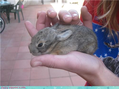 Reader Squee: Rescued Baby Bunny