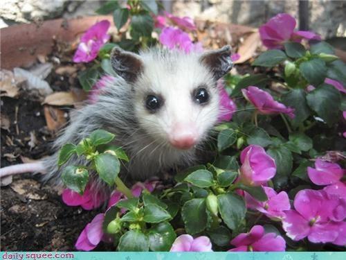 baby,cute,flowers,nose,possum,purple,tail
