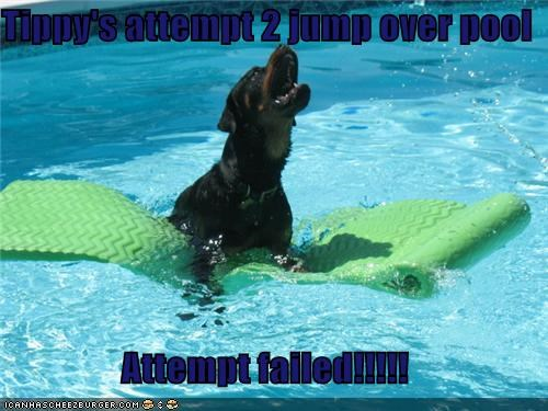 Tippy's attempt 2 jump over pool  Attempt failed!!!!!