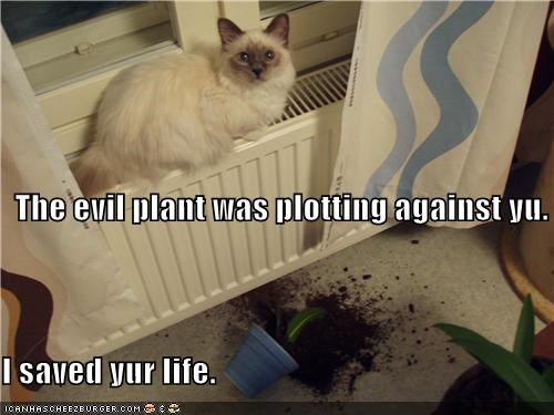 The evil plant was plotting against yu. I saved yur life.