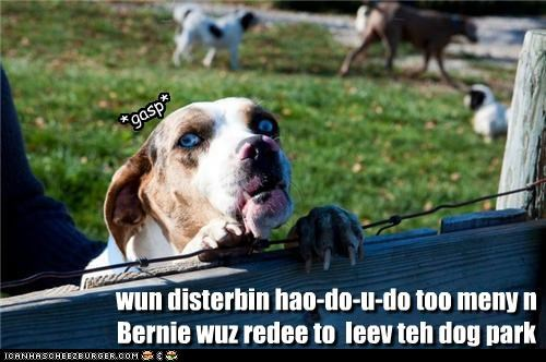 wun disterbin hao-do-u-do too meny n Bernie wuz redee to  leev teh dog park