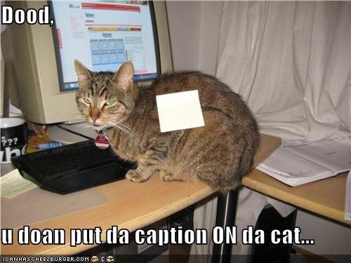 Dood,   u doan put da caption ON da cat...