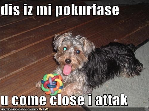 dis iz mi pokurfase  u come close i attak