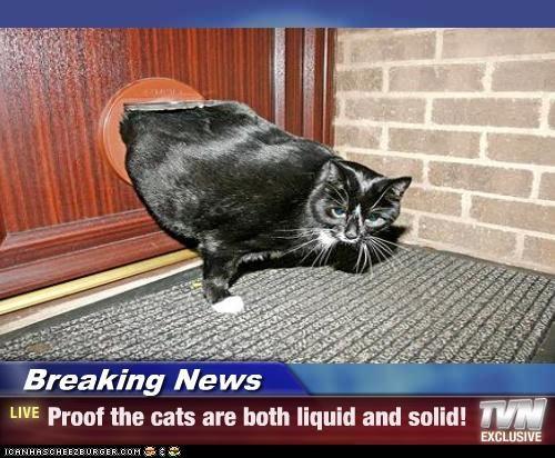 Breaking News,caption,captioned,cat,door,hole,liquid,news,proof,solid,squeezing
