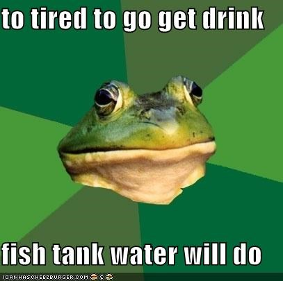 Fish Drink Water on Cheezburger   To Tired To Go Get Drink Fish Tank Water Will Do