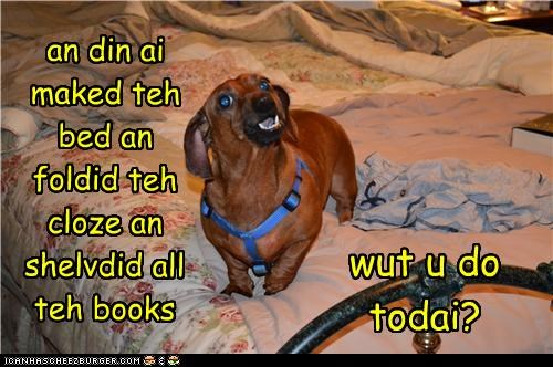 an din ai maked teh bed an foldid teh cloze an shelvdid all teh books