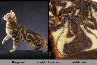Bengal cat Totally Looks Like marble cake