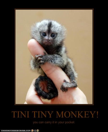 TINI TINY MONKEY!