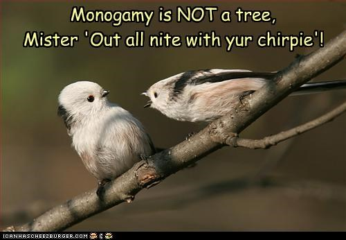 birds,caption,captioned,cheating,confusion,couple,displeased,mahogany,monogamy,moonlighting,relationship,words